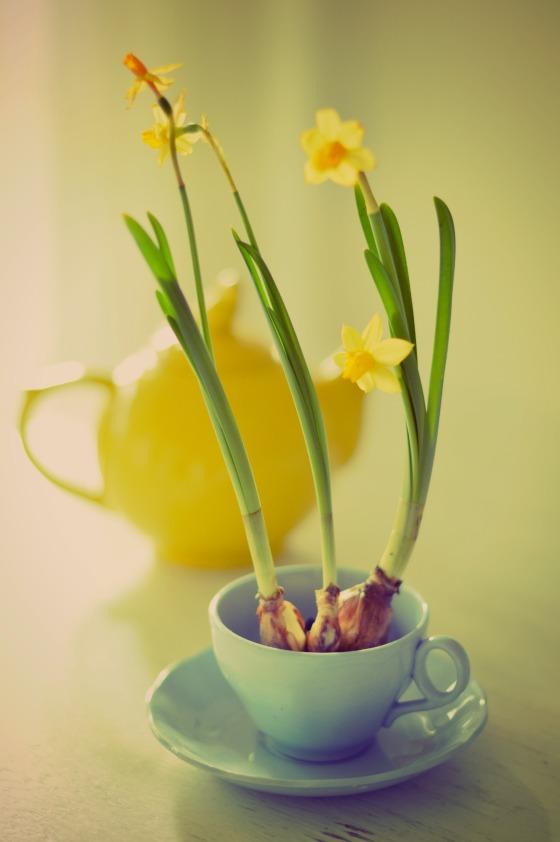 Daffodils and tea