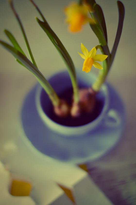 daffodils and tea...