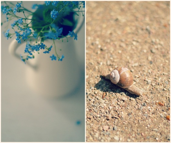 flowers and snails