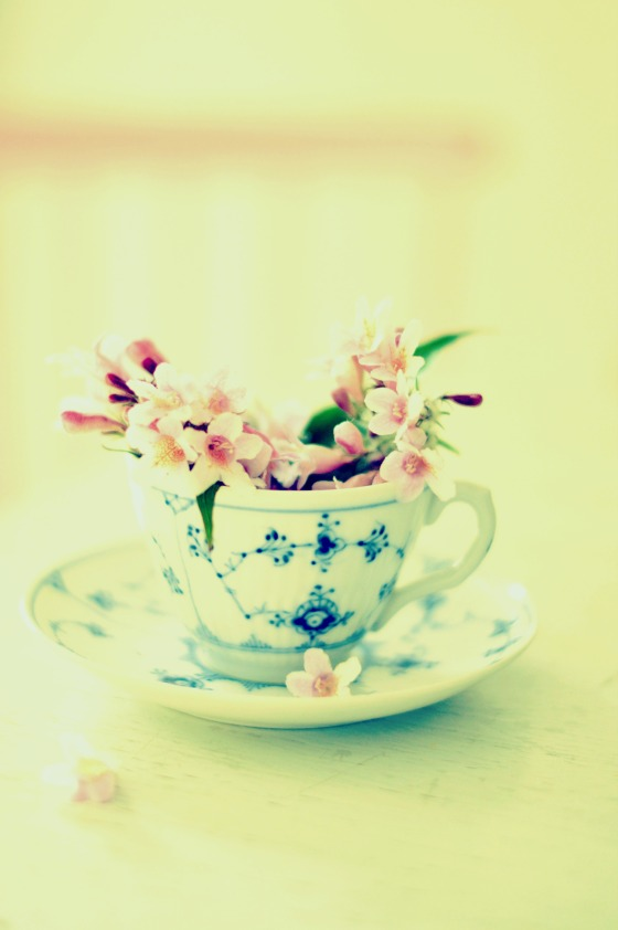 Blossoms in a teacup